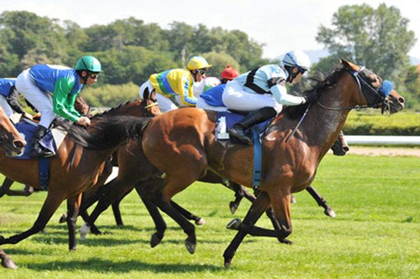 Pferde Lebensversicherung