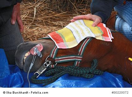 Pferd Operation