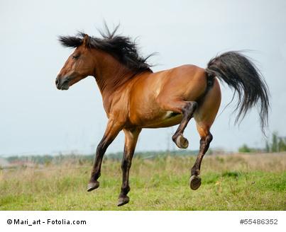 Pferd tritt aus